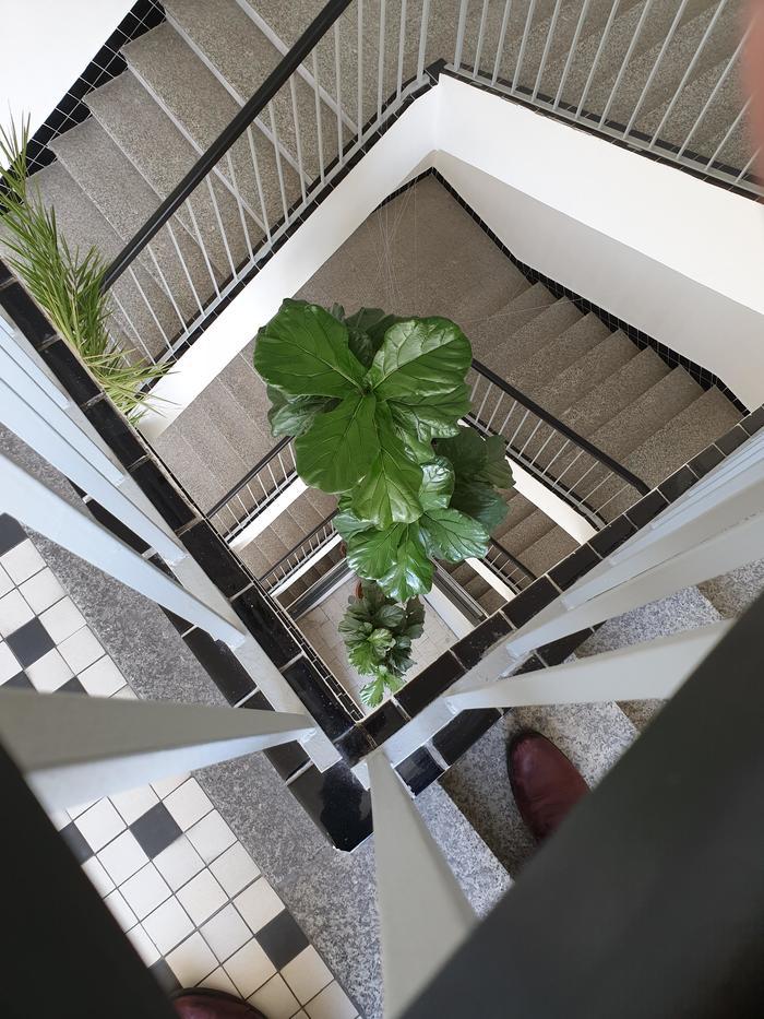 Растение в четырёхэтажном офисе