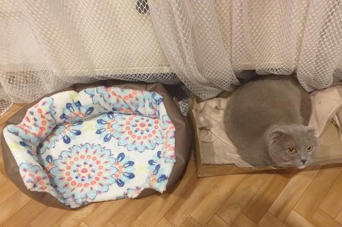 Не оценил :( Кот, Удобство, Хозяин ты идиот