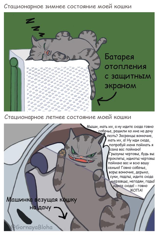 Зимнее vs. Летнее поведение кошки