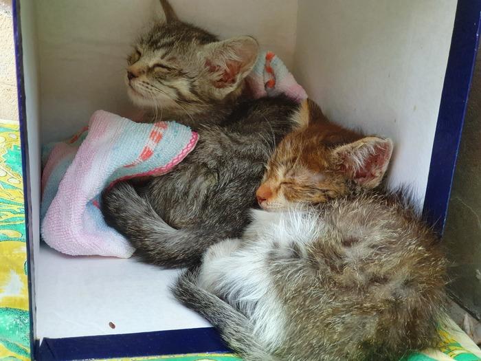 Две кошечки ищут дом Котята, Ищу дом, В добрые руки, Кот, Москва, Отдам, Без рейтинга