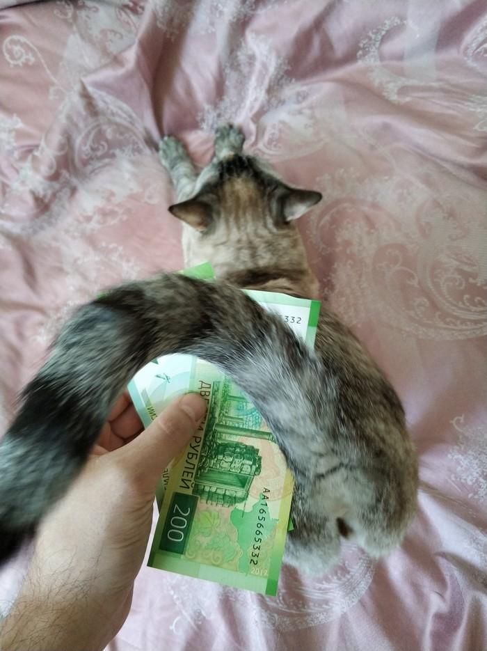 Дизайн новых 200 рублёвые не прошел. 200 и 2000 рублей, Твоя киска в зоне риска, Кот