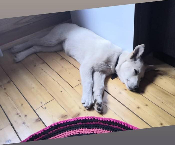 Нашли собаку Красноярск, Собака, Друг, Потерялась, Найдена собака, Помощь животным, Без рейтинга