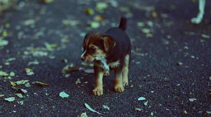 Женщина из Норвегии скончалась от бешенства, подобрав во время своего отпуска беспризорного щенка. Здоровье, Норвегия, Бешенство, Собака, Туризм, Красивая девушка, Длиннопост, Негатив