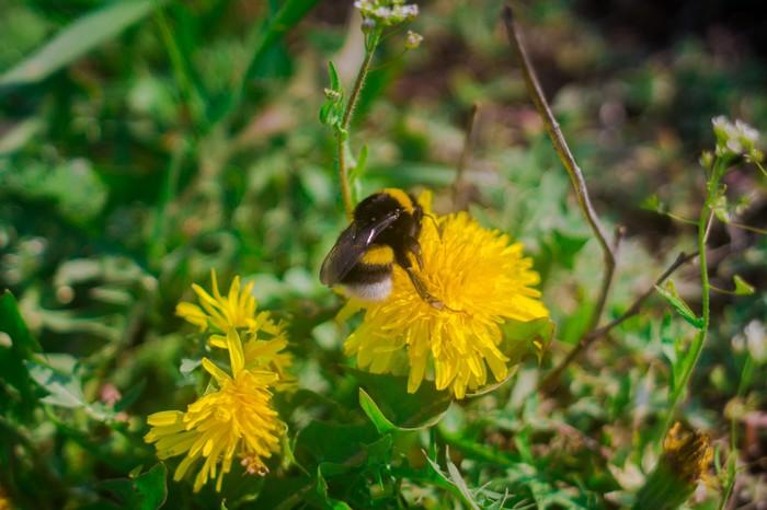 Немного весеннего цветения. Алтай, Весна, Фотография, Природа, Длиннопост