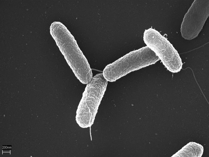 8 болезней, которые можно подцепить от животных Болезнь, Биология, Животные, Длиннопост