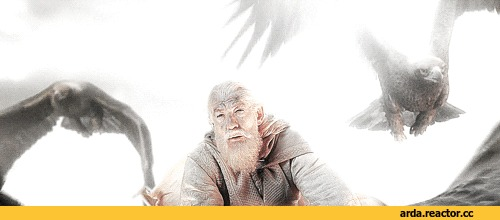Орлы и драконы. Дракон, Орел, Сюжет, Гифка, Игра престолов, Игра престолов 8 сезон