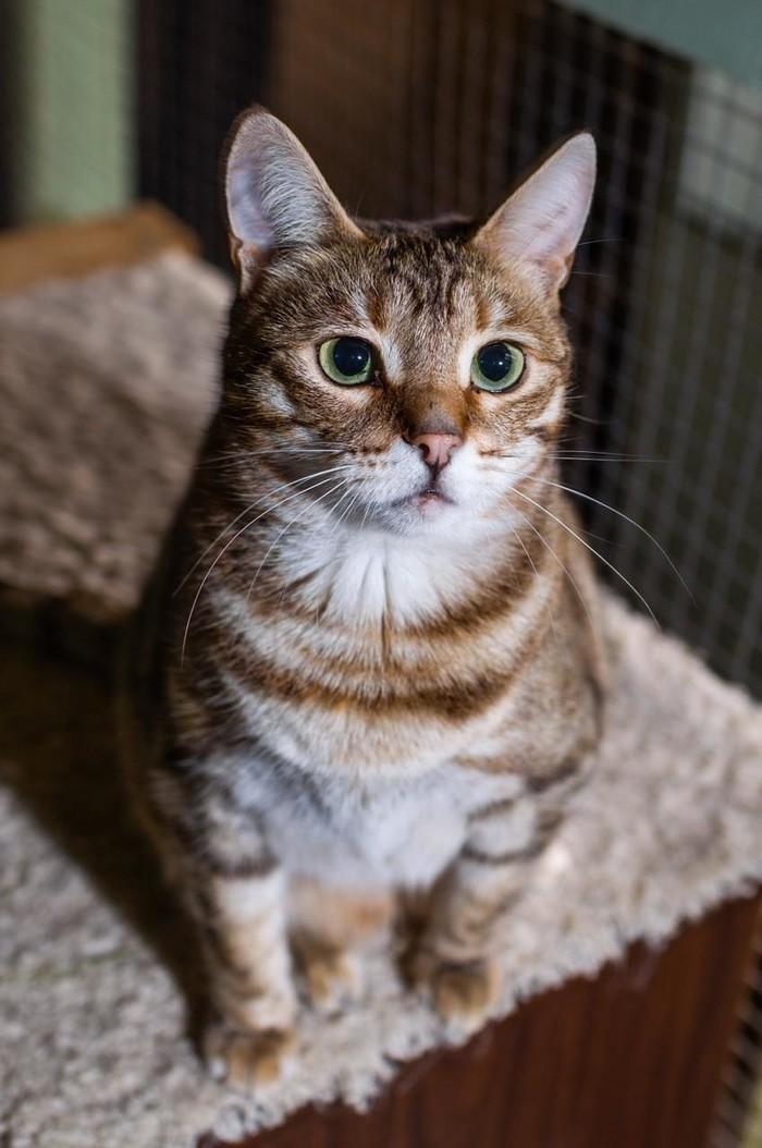 Кошку Киру бросили хозяева!!! Москва, Брошенная кошка, Ищу дом, Ищу хозяина, В добрые руки, Длиннопост, Кот