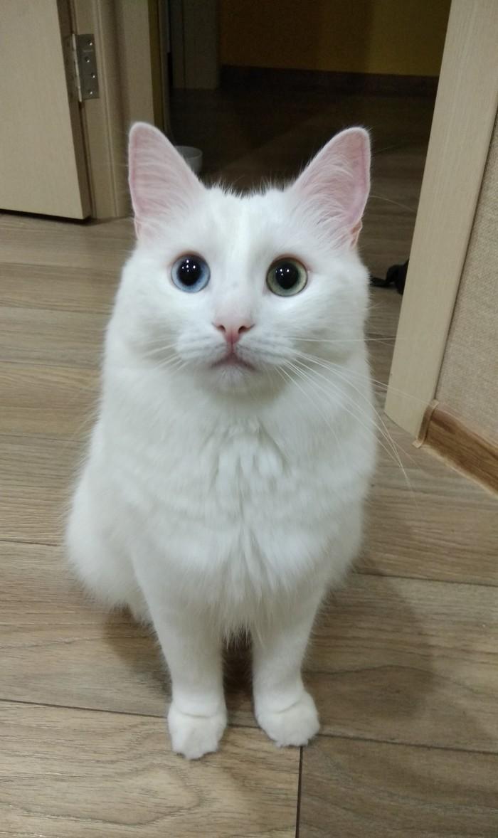 Привет я Кокос - розовый нос.