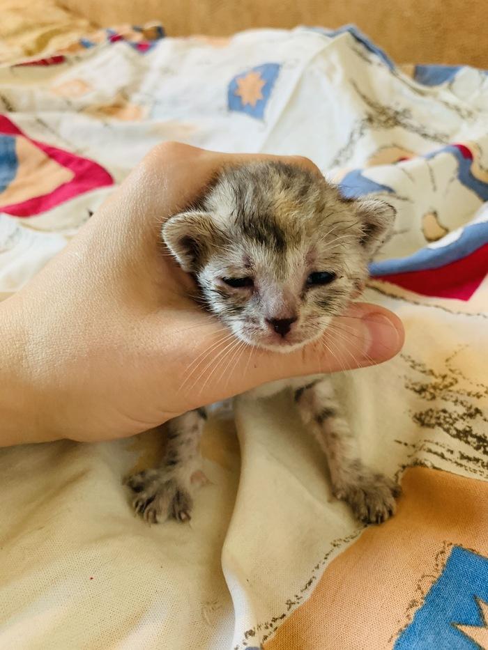 Котята ищут заботливых друзей:) Котята, Корзинка с котятами, Типичный Донецк, Длиннопост, В добрые руки, Без рейтинга