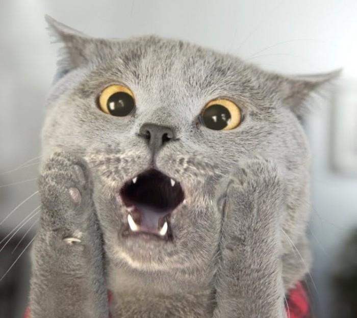 Я научил кота читать Кот, Свежее