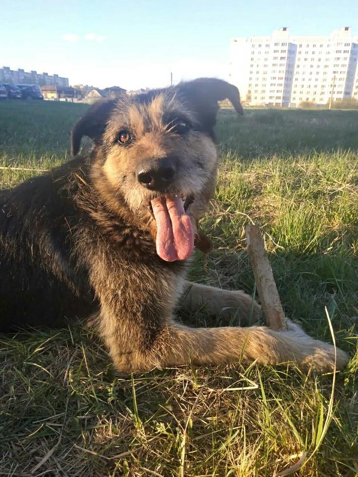 Тверь. Помогите найти собаке новый дом! Помощь, Животные, Найдена собака, Сила Пикабу, Тверь, Помощь животным, Длиннопост, Без рейтинга