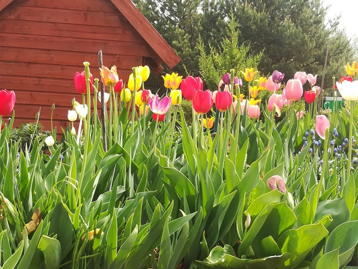 Весна Весна, Природа, Красота, Длиннопост