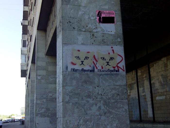 Котейки против Граффити, Санкт-Петербург, Стрит-Арт, Кот