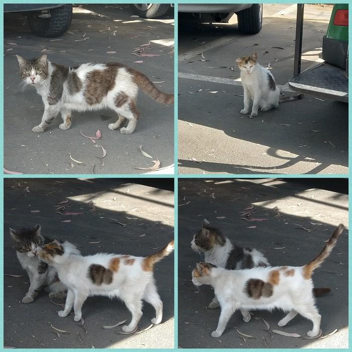 Котолюбовь Кот, Котомафия, Любовь