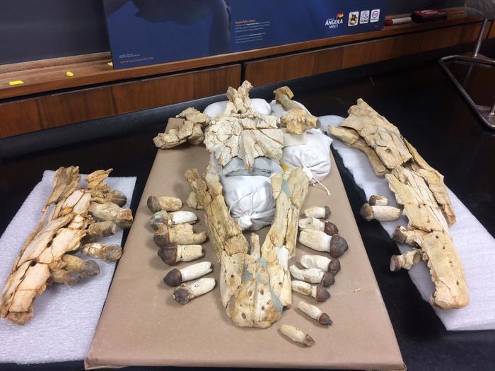 Глобиденс. Палеонтология, Окаменелости, Мезозой, Длиннопост, Копипаста