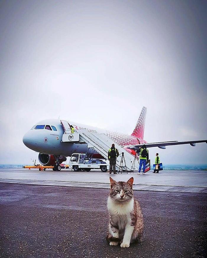 Кот из Минвод! Кот, Басик, Минеральные воды, Авиация, Длиннопост