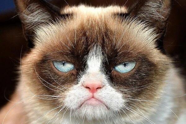 Знаменитая кошка-мем, чья настоящая кличка, Соус Тардар, как сегодня стало известно, умерла в возрасте 7 лет, оставив миллионы поклонников. Трехцветная кошка, Длиннопост, Grumpycat, Кот, Мемы