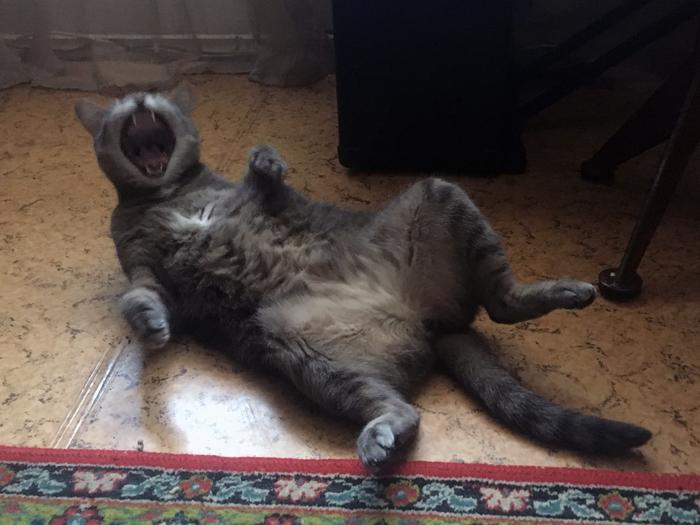 Рассмешил кота....