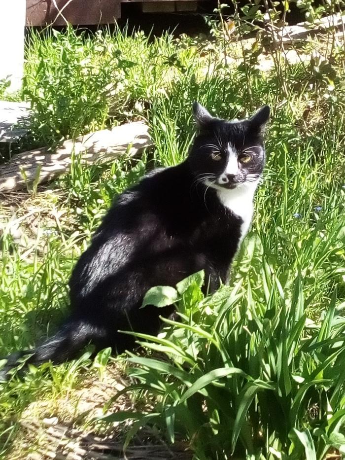 Суровая кошка