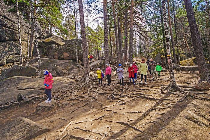 Сегодня пробежались по скалам Красноярские столбы, Путешествия, Весна, Цветы, Фотография, Активный отдых, Отдых в России, Длиннопост