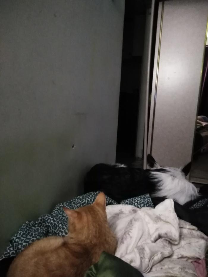 Кошка и пес Друзья, Домашние животные, Уют, Кот, Собака
