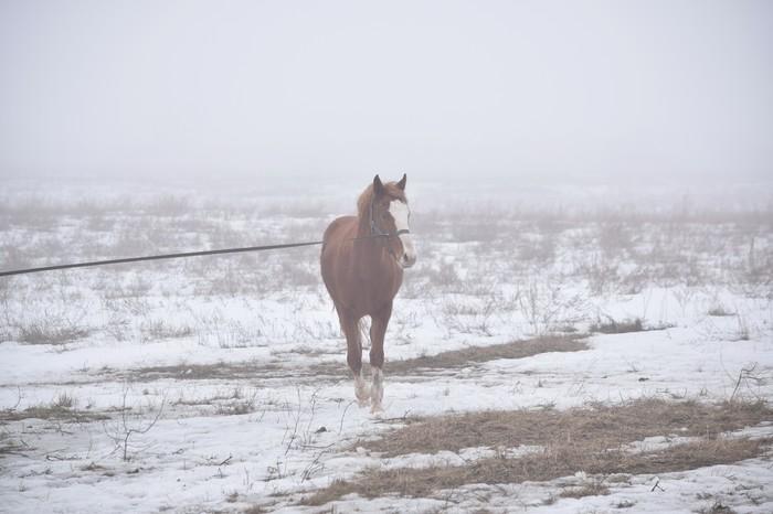 Лысый конь Лошадиные истории, Аллергия, Длиннопост, Лошади