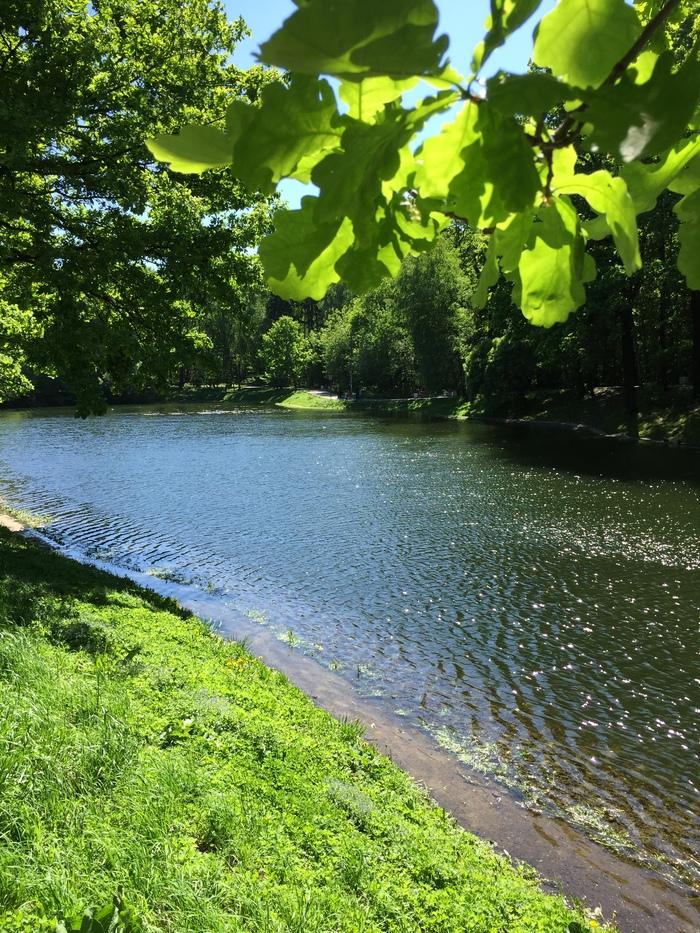 Лианозовский парк и пруд Парк, Пруд, Весна, Лианозовский парк, Рай, Природа, Длиннопост