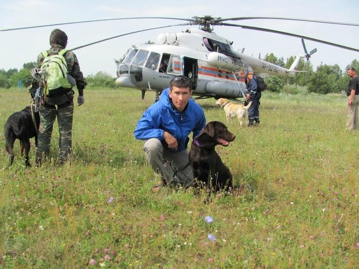 В Челябинске нашли лабрадора МЧС, который пропал три года назад Животные, Собака, Потеряшка, Длиннопост