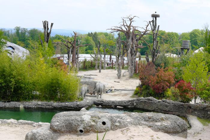 Зоопарки Европы | Kaeng Krachan – Zooh! –  Zurich Слоны, Зоопарк, Цюрих, Швейцария, Путешествия, Длиннопост