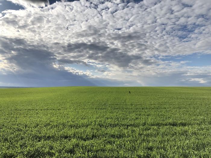 Безмятежность Поле, Самара, Природа, Зелень, Самарская область, Весна, Фотография, Пейзаж