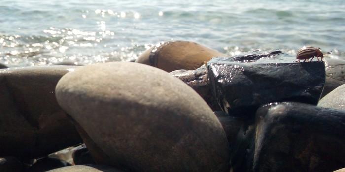 Даже колорадский жук на море.