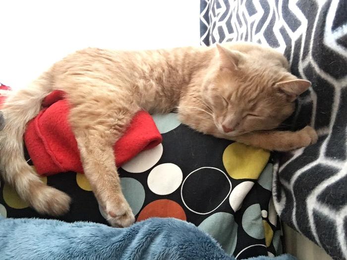 Пропал кот, без рейтинга Без рейтинга, Потерялся кот, Пропажа, Санкт-Петербург, Кот, Длиннопост, Помощь