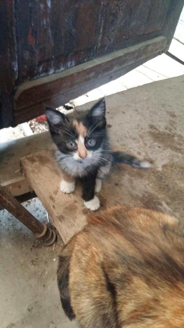 Кошачьи дети ищут дом (г.Иваново) В добрые руки, Иваново, Длиннопост, Котята, Кот, Без рейтинга