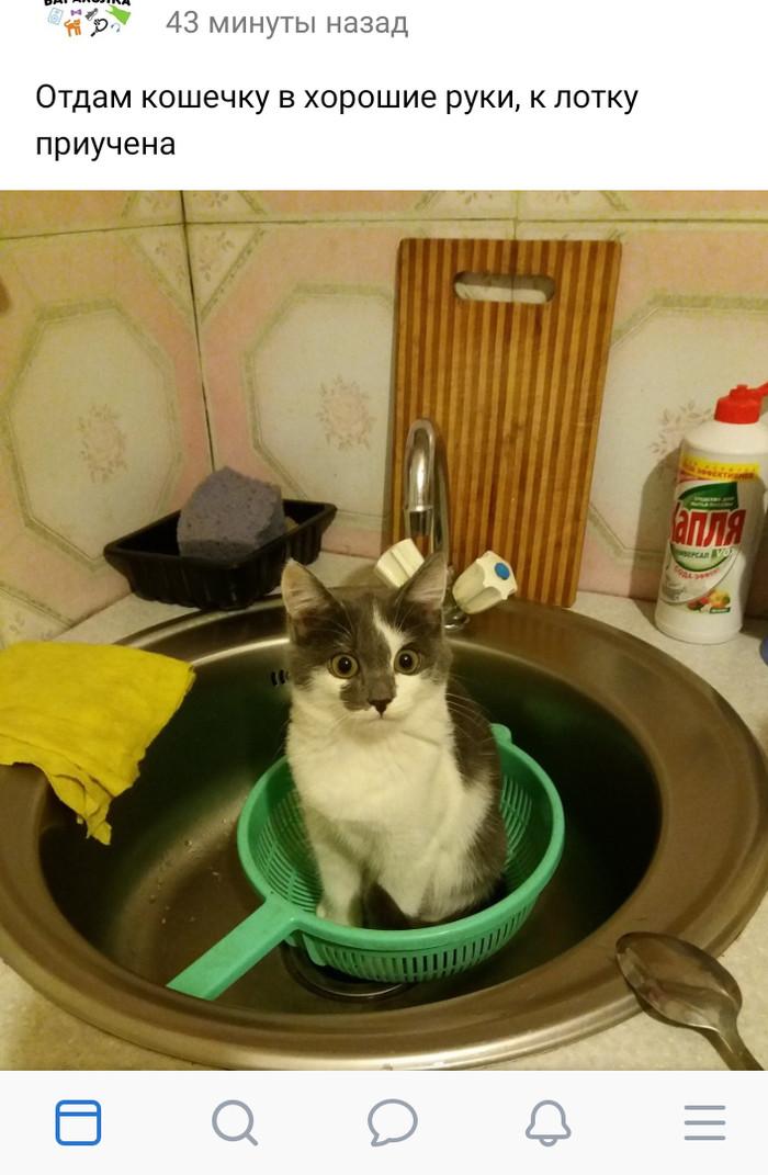 К лотку приучена Интернет, Трехцветная кошка, Объявление, Кот, Котомафия