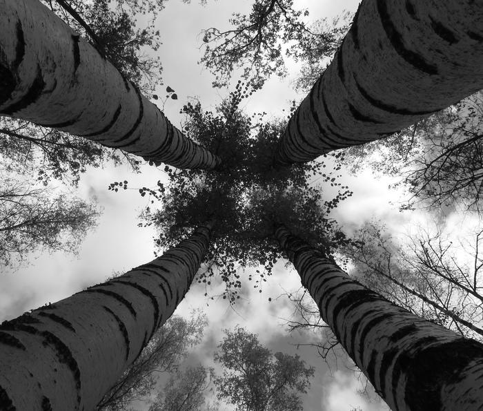 «Всегда вместе» Фотография, Красота природы, Россия