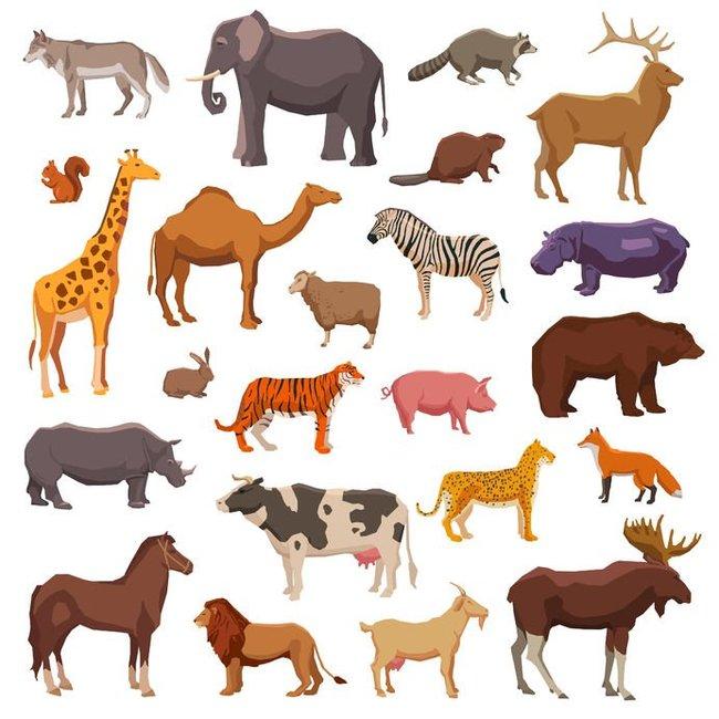 Фламинго, слоны и акулы: как слепые взрослые люди узнают о внешности животных? Зрение, Слепота, Наука, Длиннопост