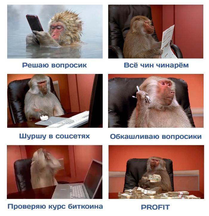 Новость №840:Американские ученые выяснили, что макаки могут пошагово анализировать многоступенчатые задачи Наука, Биология, Психология, Образовач