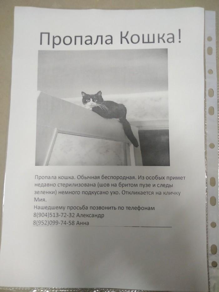 Пикабу помоги! Потеряшка, Кот, Длиннопост, Без рейтинга, Санкт-Петербург