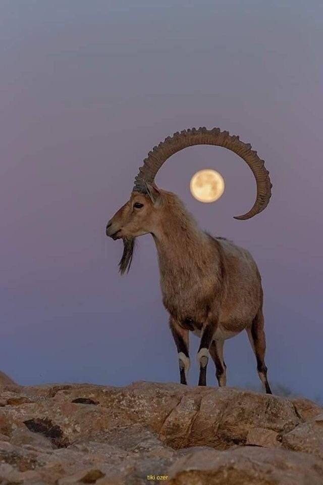 Поймал луну
