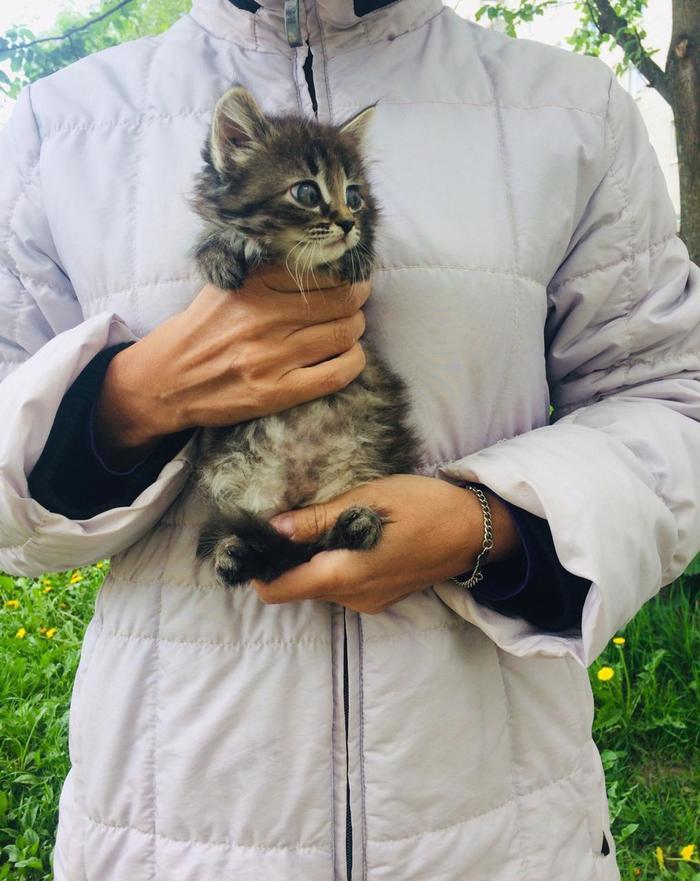 Сразу 9 котят от домашних кошек подкинули в клинику. Теперь мы ищем им дом. Без рейтинга, В добрые руки, Помощь животным, Кот, Санкт-Петербург, Длиннопост