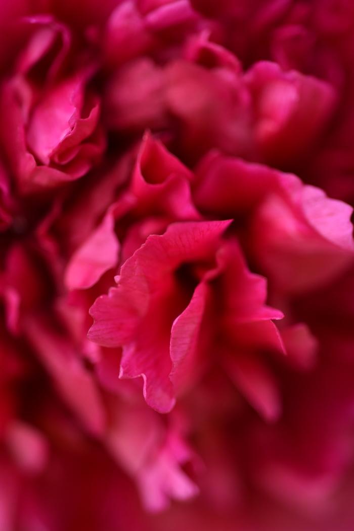 UNS #1 Цветы, Качество JPG, Выходные, Дача, Яркие цвета, Красота природы, Природа, Длиннопост
