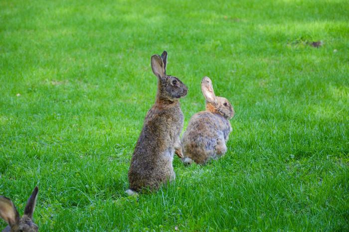 Зверушки весной Животные, Косуля, Кролик, Петух, Весна, Фотография, Милота, Длиннопост