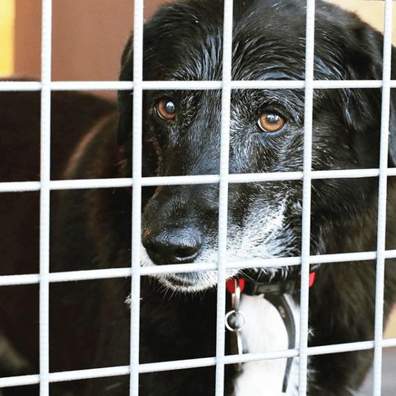 На второй день Ричи понял, что его вернули в приют. Из глаз собаки катились слезы Собака, Длиннопост, Питомец, Животные