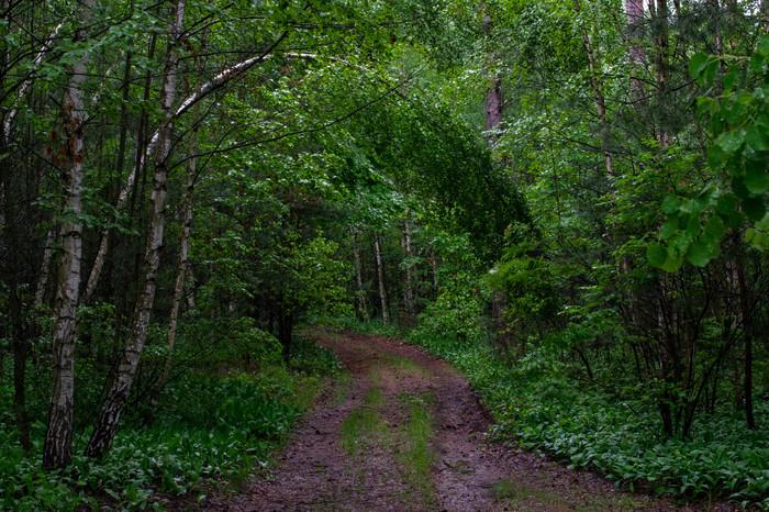 Лесные зарисовки. Часть 2 Начинающий фотограф, Фотография, Лес, Длиннопост, Овчарка, Собака