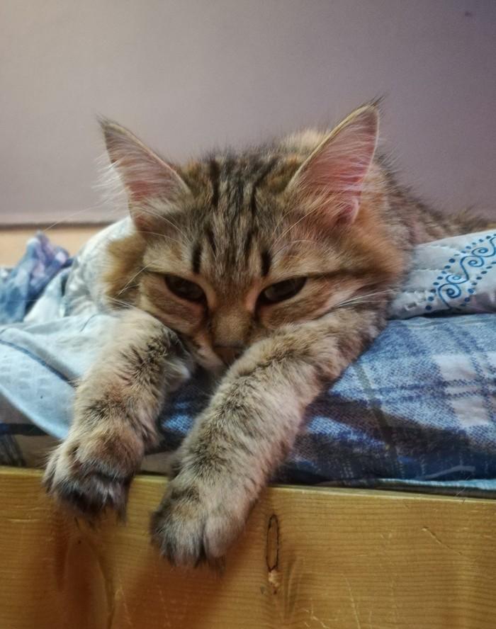 Жить хорошо Кот, Котомафия, Фотография