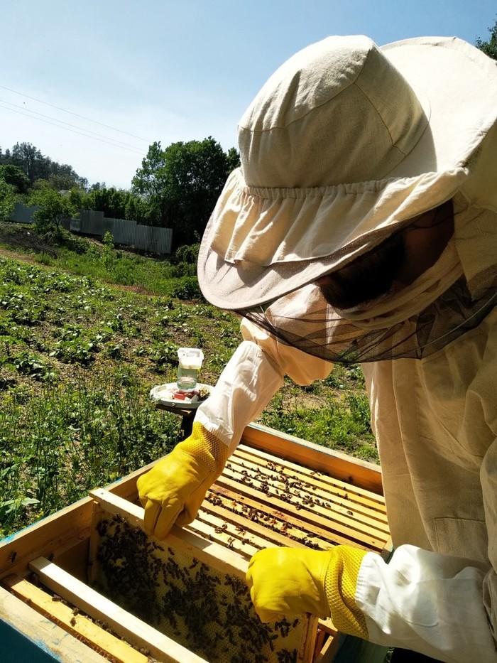 Первые ошибки =) Пчеловодство, Пчелы, Роение, Рой, Длиннопост