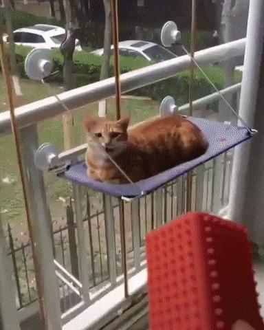 Техническое обслуживание кошки