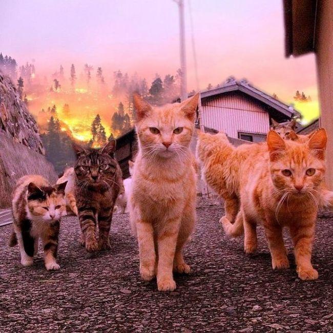 Котики-убийцы не оборачиваются на взрывы Кот, Фантастика, Инопланетяне, Нашествие, Длиннопост