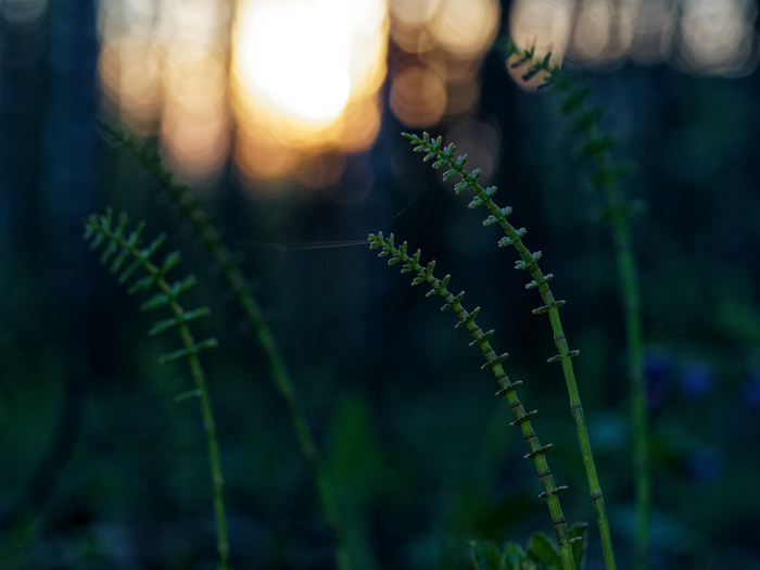 В лучах заката Фотография, Закат, Цветы