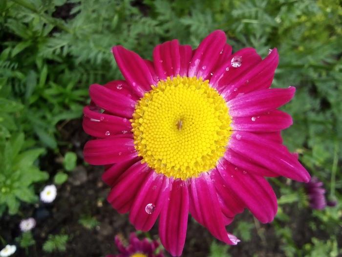 После дождя Дождь, После дождя, Цветы, Дача, Длиннопост